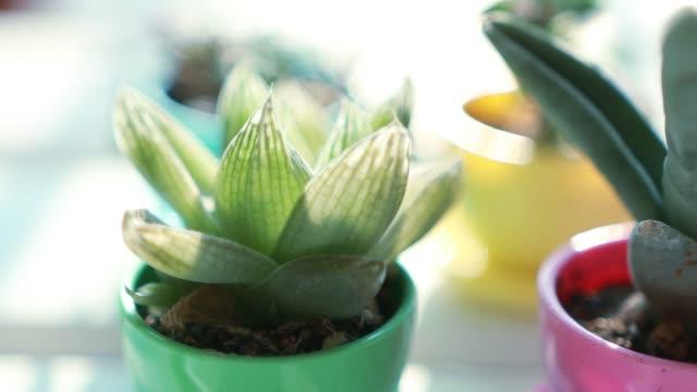 多肉植物や家植物の様々な - 観葉植物点の映像素材/bロール