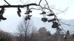 Various shoes hanging from a tree. Blue sky on the background on sunny day. Public park in Bolzano, Italy. Trentino
