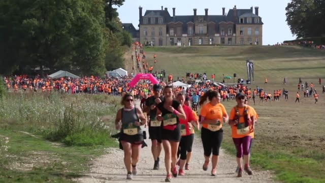 """various shots as 1,500 french people run """"thoiry wild race"""" for 10 kilometers between wild animals including lions, zebras, elephants and giraffes in... - safari animals stock videos & royalty-free footage"""