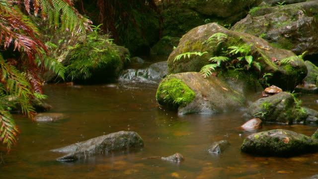 various shots creek stream running over moss covered rocks rain drops on water in rainforest area of blue mountains national park australia close ups - コケ点の映像素材/bロール