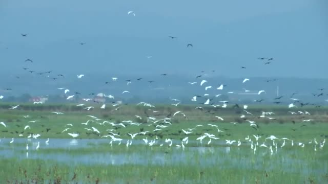 various shots form the kizilirmak delta wetland and bird sanctuary which is on unesco's tentative world heritage list in turkey's black sea province... - unesco stock videos & royalty-free footage