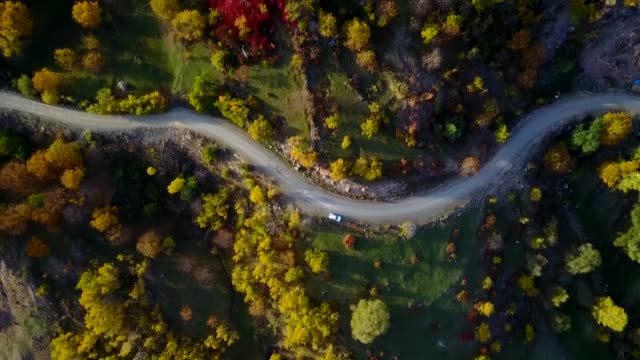 various shots from a foliage of autumncolored mixed deciduous trees in eastern igdir province turkey on october 26 2017 - deciduous stock videos & royalty-free footage