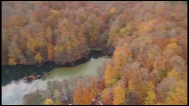 Various shots from a foliage of autumncolored mixed trees at Yedigoller National Park in Black Sea province of Bolu on November 10 2018