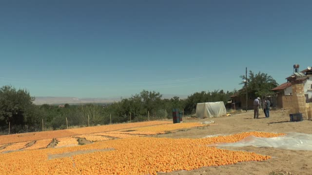 various shots from malatya apricots on july 12 2017 in malatya after a threeyear wait turkey's famed homegrown apricot has earned a coveted eu... - apricot stock videos & royalty-free footage