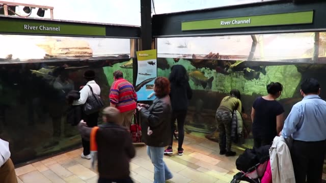 various shots from the admissionfree day at shedd aquarium in chicago illinois on january 25 2018 - shedd aquarium stock videos and b-roll footage