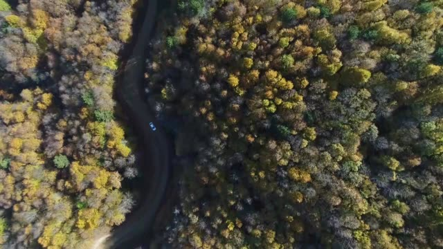 various shots of a foliage of autumncolored mixed trees at uludag mountain in bursa province of western turkey on november 11 2017 - uludag stock videos and b-roll footage