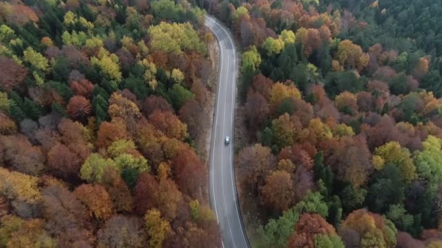 various shots of a foliage of autumncolored mixed trees at uludag national park in the northwestern turkish province of bursa on october 15 2018 - uludag stock videos and b-roll footage