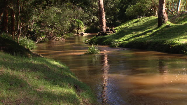 stockvideo's en b-roll-footage met various shots of a pretty stream creek surrounded by green banks and trees / close up water flows around reeds in creek / vs brown water creek gently... - recreatief paardrijden
