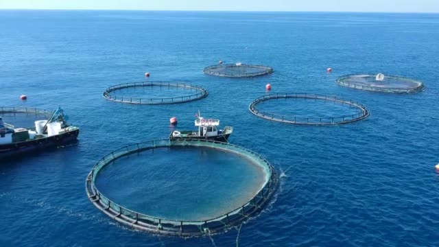 various shots of a sea bream and bass farm installed in the waters of the mediterranean sea in southern hatay province of turkey on october 18, 2018. - salt water fish stock videos & royalty-free footage