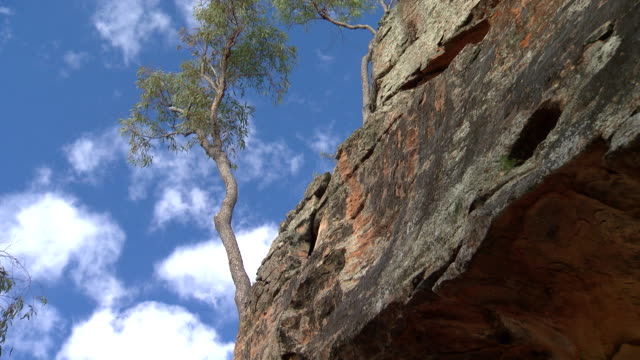 various shots of a tree growing from the sandstone wall rockface of the dandry gorge pilliga forest - rock face stock videos and b-roll footage