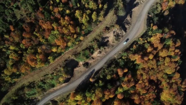 various shots of autumncolored mixed deciduous trees at hidirnebi highland during autumn season in akcabat district of trabzon turkey on november 09... - deciduous stock videos & royalty-free footage