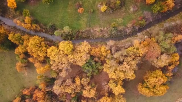 various shots of autumncolored mixed deciduous trees at uckaya valley in tuzluca district of turkey's eastern igdir province on october 29 2019 - deciduous stock videos & royalty-free footage