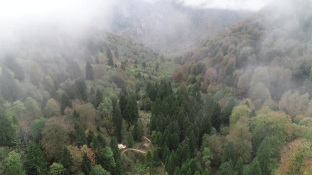 various shots of autumncolored mixed deciduous trees in the kuzalan natural park in turkey's northern giresun province on october 31 2019 - deciduous stock videos & royalty-free footage