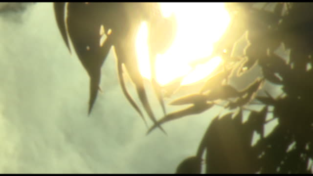 various shots of clouds moving past sun filtering through leaves on swaying branches - ondeggiare video stock e b–roll