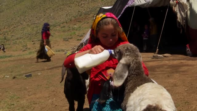 Various shots of daily life of nomadic families in Senyayla rural area of Mus province eastern Turkey on July 19 2017 Nomadic families who have to...