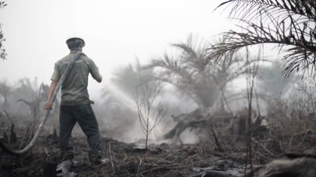 stockvideo's en b-roll-footage met various shots of fire fighters hosing down charred forests in pelalawan riau province indonesia a wide shot of a fire fighter spraying his fire hose... - fire hose