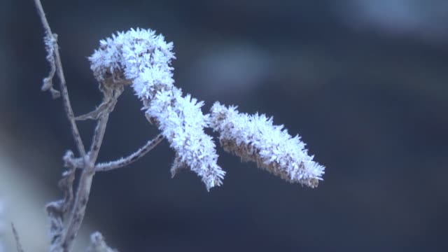 various shots of hoarfrost on plants in northeastern kars province of turkey on november 09 2018 - ice crystal stock videos & royalty-free footage