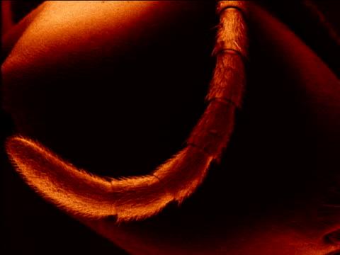 vídeos de stock, filmes e b-roll de various shots of micrograph of soldier driver ant east africa - micrografia científica