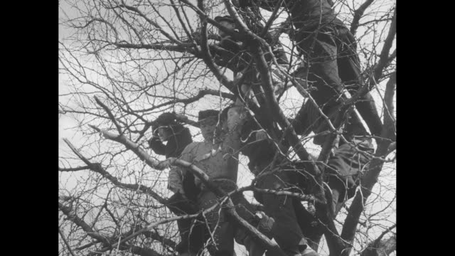 vídeos de stock e filmes b-roll de various shots of onlookers in trees above crowds in street / gv people ride bicycles in street past onlookers in trees / crowd of onlookers stand on... - maça