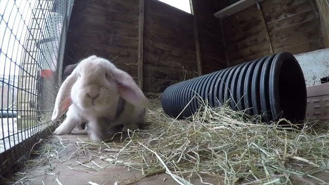 various shots of pet rabbits in hutches>> on march 26 2016 in royston england - osterhase stock-videos und b-roll-filmmaterial