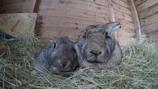 various shots of pet rabbits outdoors and in hutches>> on march 26 2016 in royston england - osterhase stock-videos und b-roll-filmmaterial