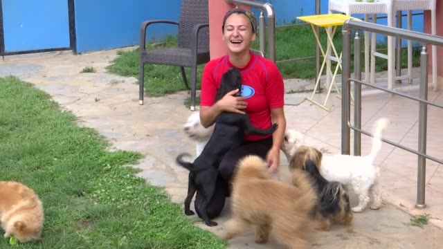 various shots of the dogs during water therapy session in istanbul turkey on august 02 2019 nur cetinsarac firstly rented houses to give his dog... - spa treatment stock videos & royalty-free footage