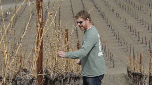 Various shots of the drought impact in the winemaking region of Paso Robles California on February 18 Wide medium and tight shots of Jason Haas...
