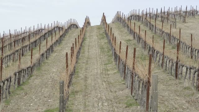 various shots of the drought impact in the winemaking region of paso robles california on february 18 wide shots of arid vineyards a tight shot of a... - pruning stock videos & royalty-free footage