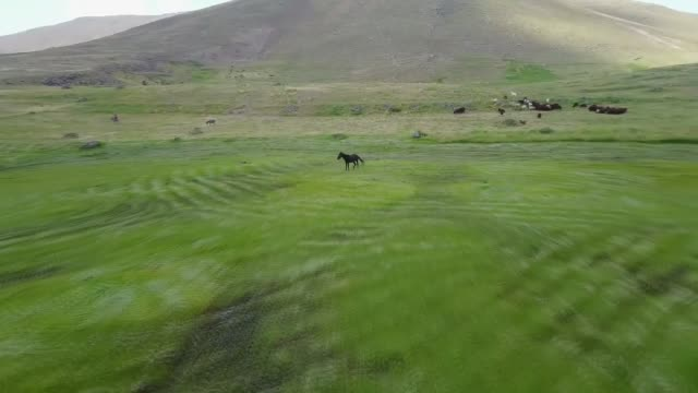 various shots of the farmers use scythe to cut down a field at sinek highland of agri province of turkey on august 08 2017 - scythe stock videos and b-roll footage