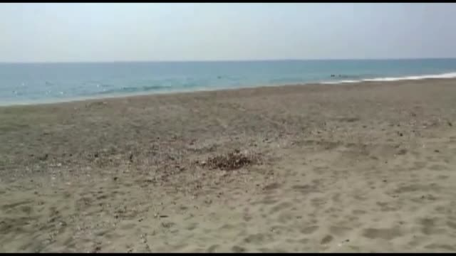 various shots of the newly hatched loggerhead turtles make their way to the sea in alanya district of turkey's southern province on august 03 2019 - loggerhead sea turtle stock videos & royalty-free footage