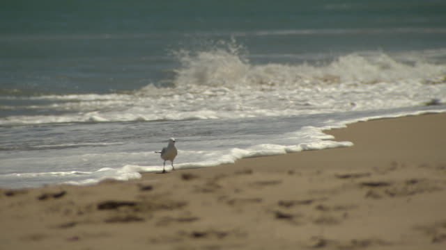 Various shots of the surf white wash crashing into the sand / single seagull standing on the sand at edge of the wave / family walking along the...