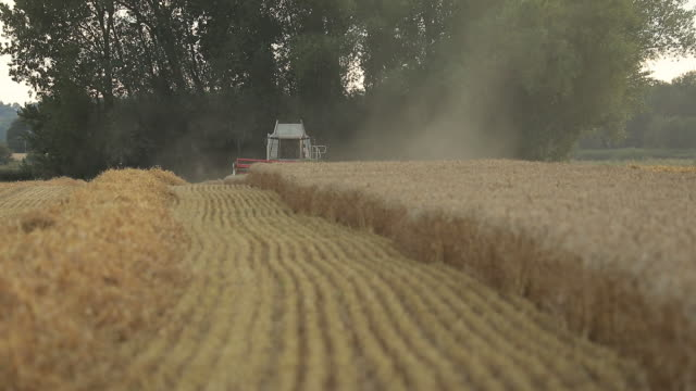 various shots of wheat harvesting in kent uk on wednesday august 5 2020 - horizon over land stock videos & royalty-free footage
