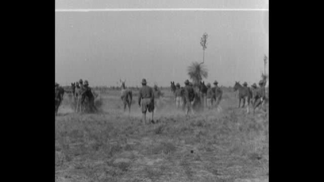 various shots of ww1 1st battalion iowa soldiers attempting to train or break wild mules with lots of them falling off / soldiers jumping over a rod... - maultier stock-videos und b-roll-filmmaterial
