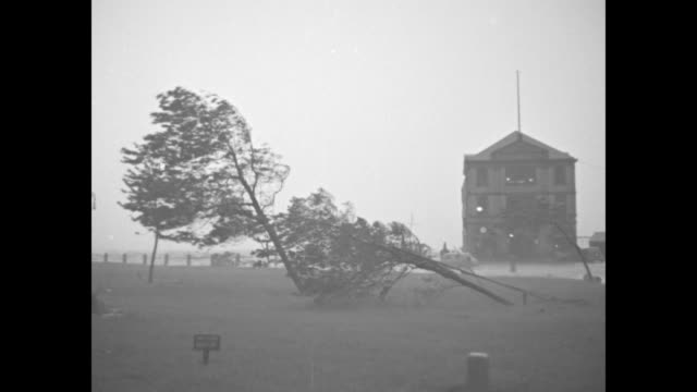 various shots policemen walking buffeted by wind and rain / trees bent almost to ground building in bg pan to uprooted tree and structures in bg /... - struggle stock videos and b-roll footage