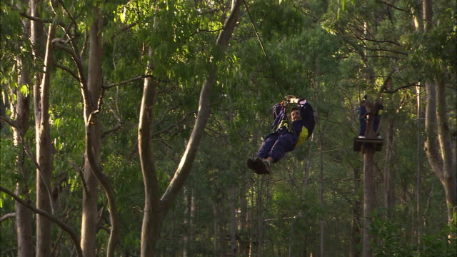 various shots treetops adventurers ride flying fox on cables / man swings onto on rope web wall and climbs