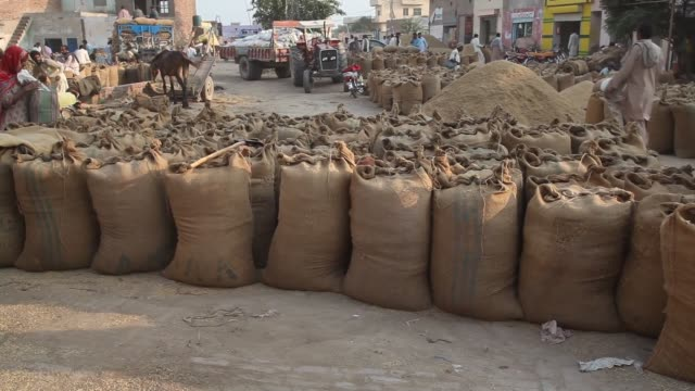 various shots workers fill and weigh bags of rice grain at a market in bucheki village in the district of faisalabad in punjab pakistan on saturday... - grain cart stock videos & royalty-free footage