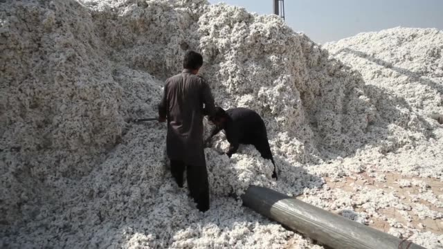 various shots workers unload cotton from a truck at a waqar cotton ginners factory in the district of lodhran punjab province pakistan on wednesday... - punjab pakistan stock videos and b-roll footage