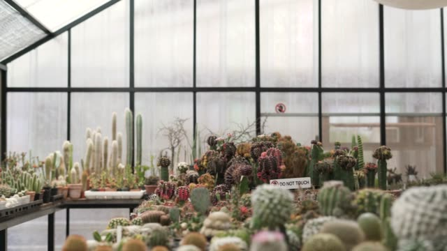 様々な種類のサボテンの鉢植え - 豊富点の映像素材/bロール