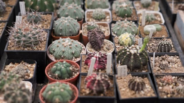 various type of cactus potted plants - cactus stock videos & royalty-free footage