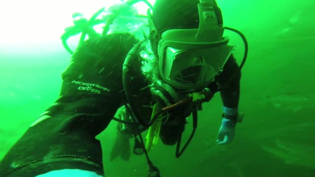 various underwater shots of salmon fish swimming around filmed with a gopro camera by a diver as he checks for damage to salmon nets at the scottish... - äußere hebriden stock-videos und b-roll-filmmaterial