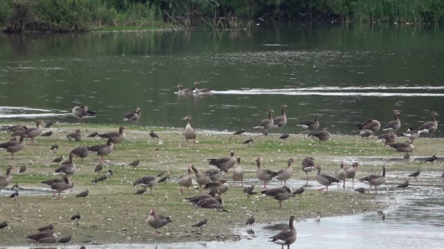 various water birds on the bird island in a see - water bird stock videos & royalty-free footage