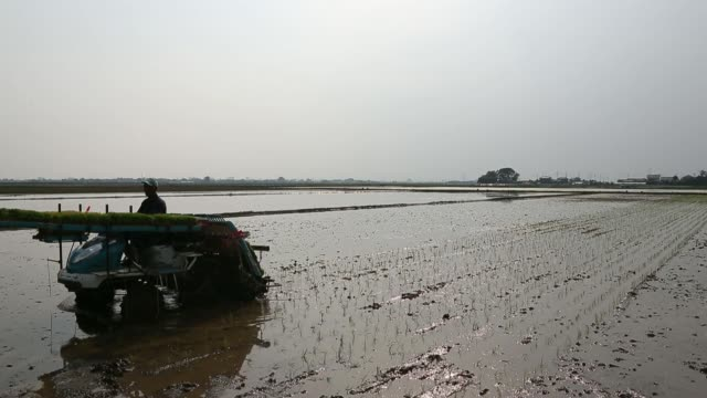 various wide shots of a farmer places rice seedlings on a rice transplanter in a paddy field in saitama japan on tuesday may 27 medium close up of... - asian style conical hat stock videos & royalty-free footage