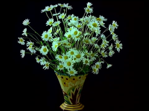 t/l vase of flowers - daisies wilt - decay stock videos & royalty-free footage