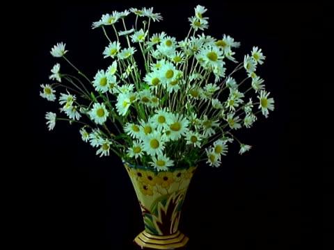 stockvideo's en b-roll-footage met t/l vase of flowers - daisies wilt - vase
