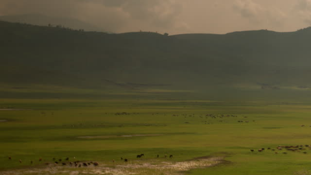 A vast african plain scattered with grazing wildlife