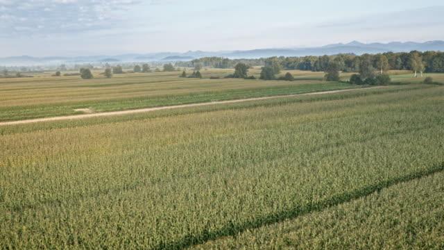 aerial vast corn field - remote location stock videos & royalty-free footage