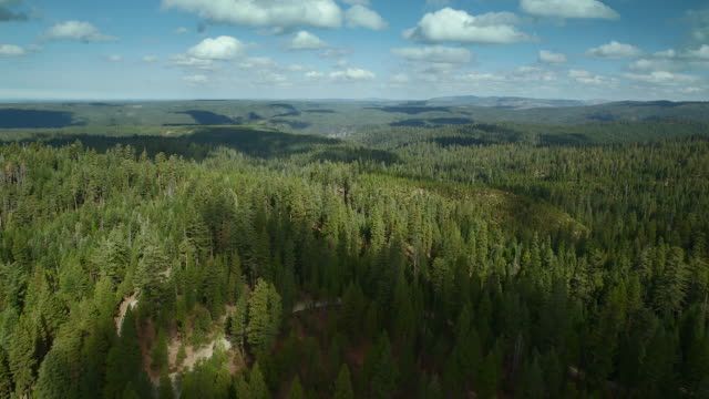 Vast Forest Landscape In California