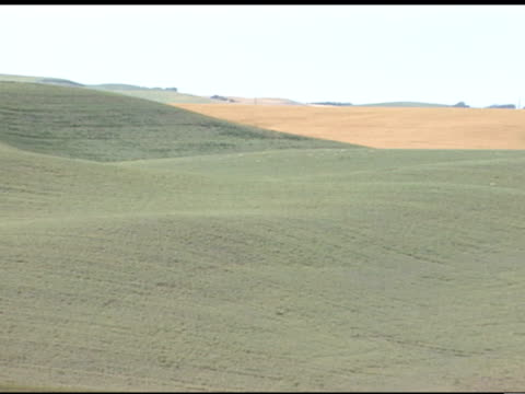 vast green hills, rolling hills, across land of the palouse field, aka palouse prairie, wheat fields bg . farming, agriculture - palouse stock videos & royalty-free footage