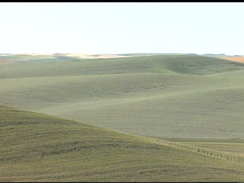 vast green hills, rolling hills, across land of the palouse field, aka palouse prairie, wheat fields in far distant bg. farming, agriculture - palouse stock videos & royalty-free footage