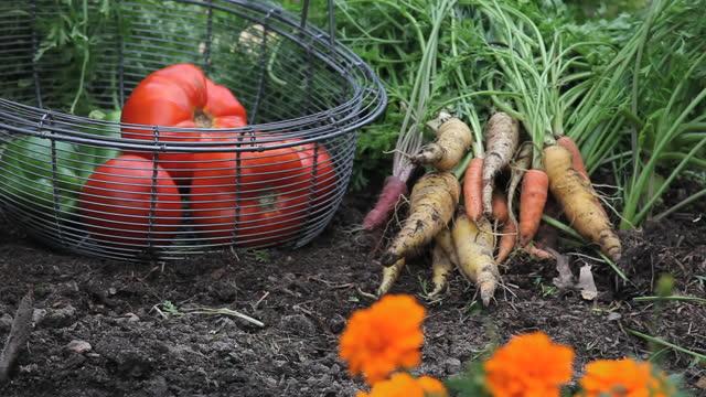 vídeos y material grabado en eventos de stock de cu pan huerto, richmond, virginia, ee. uu. - zanahoria